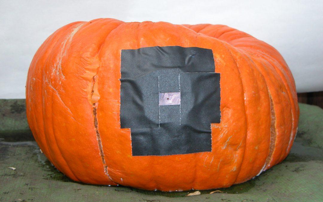 #1096 Pumpkin #28 / preparing pumpkins #2