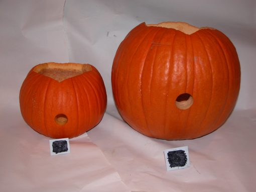 #1069 Pumpkin #1 & #2 / Mini Cooper (test)