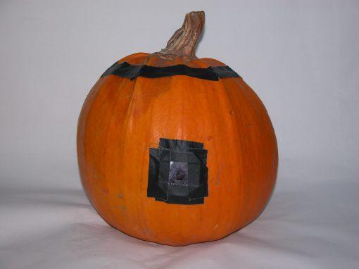 #1093 Pumpkin #25